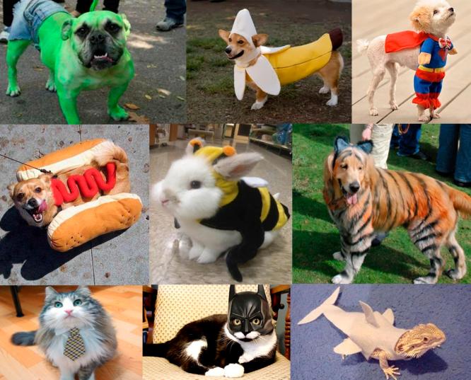 Disfraz mascotas
