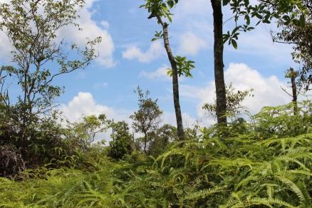 Selva Tangjung Puting