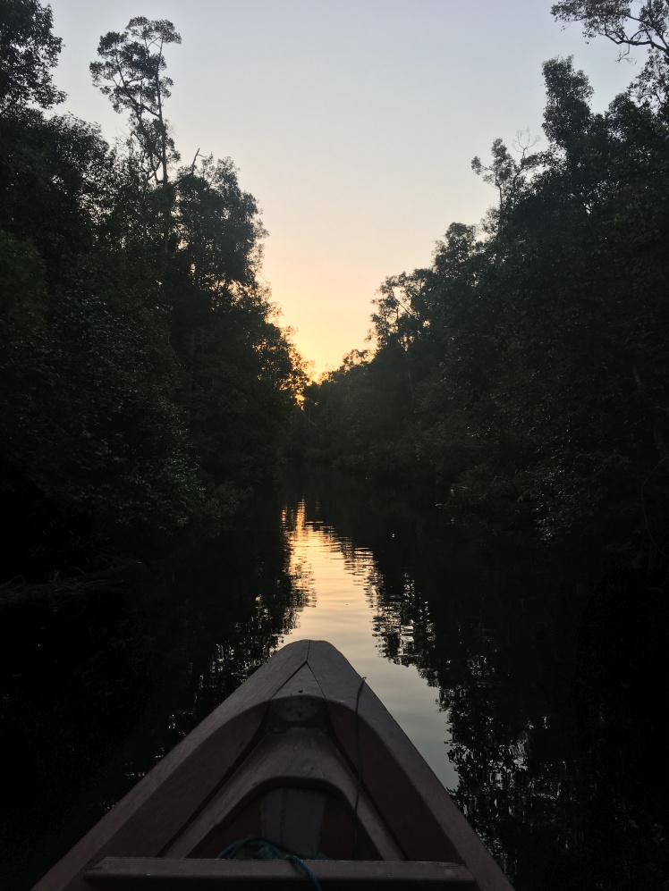 Klotok Río Borneo